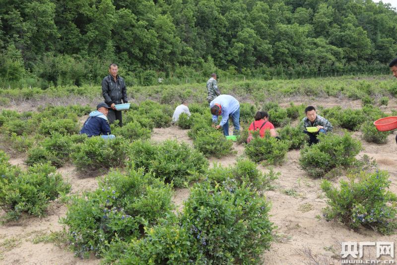 吉林安圖發展生態護林員隊伍