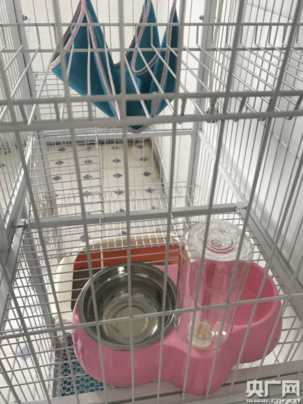 广东首个进境宠物隔离场地在广州白云机场启用
