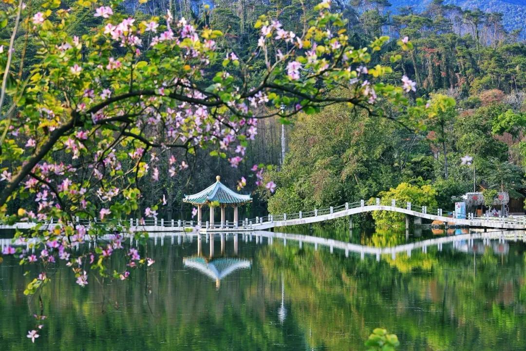 广东肇庆星湖旅游景区25日试行对市民开放